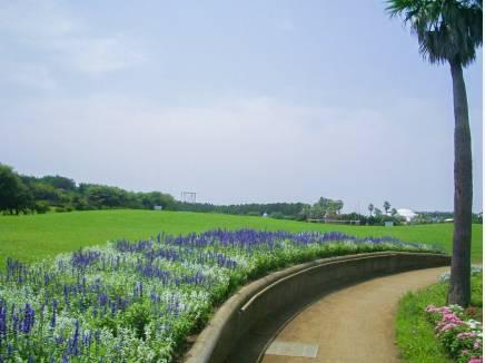 辻堂海浜公園まで徒歩10分(約800m)