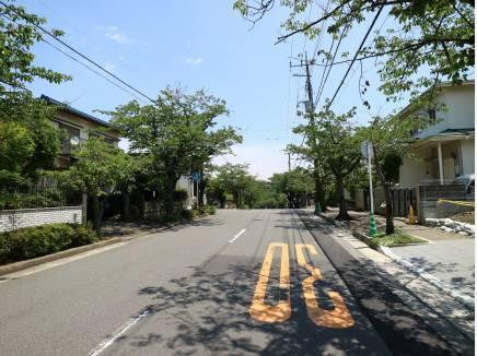 新緑の時期も美しい桜並木が前面道路。