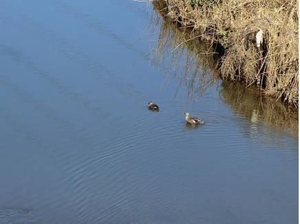 遊歩道越しの河川は野鳥の集まる水場のようでした。