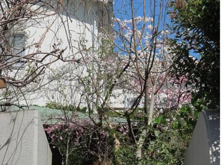 春のお花も可愛く咲き出しました