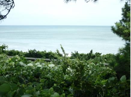 現地から約170m。高台から眺める大磯の海は青かったですよ~。