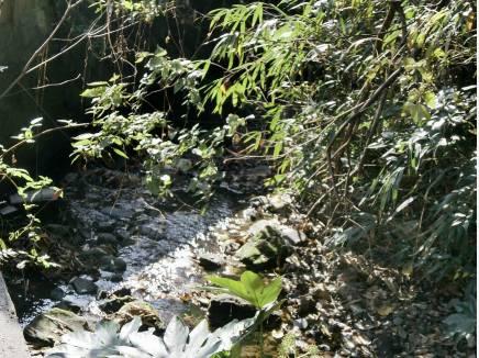 清流と緩やかなせせらぎが天然のホタルの生息地となります。