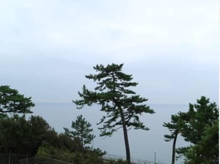 バルコニーから望む景色。海と松の静かなる景色