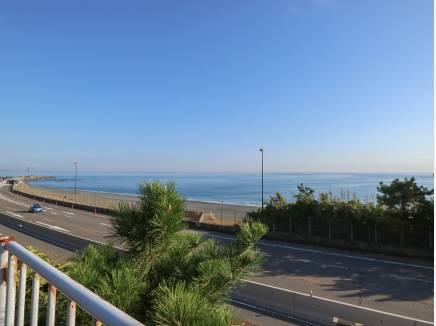 大磯の海♪(約100m)