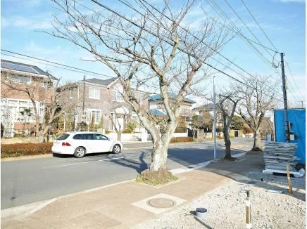 前面道路は桜並木道です。
