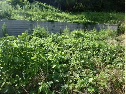 敷地奥には擁壁があり、キレイに仕切られています。