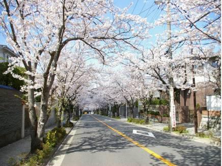 目の前は桜並木!徒歩5秒(約3m)