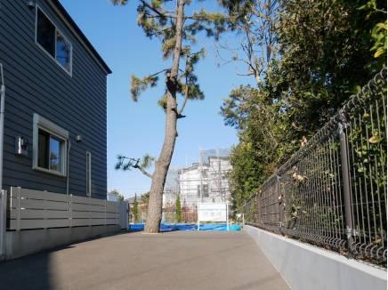 入り口にはシンボルツリーの松の木が