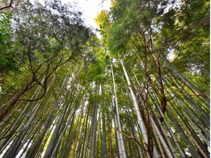 美しい竹林が隣接しておりますので風情を感じます!