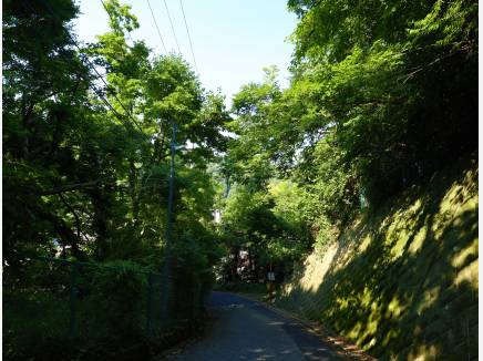 お住まいに向かう道中 緑があふれています