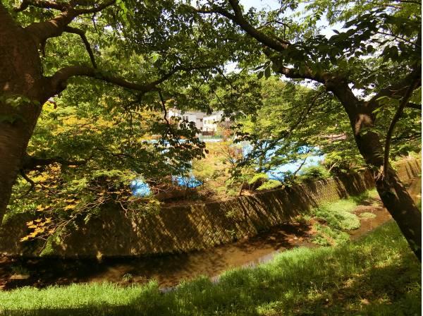 神奈川県鎌倉市浄明寺1丁目の土地