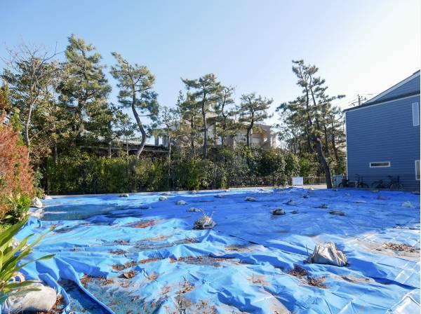 松の木が残る数少ない住環境