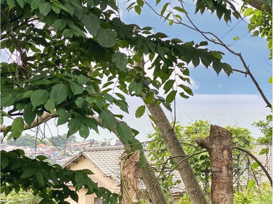 建物裏の道路斜面から。スカイバルコニーを設ければこんな眺望かも?