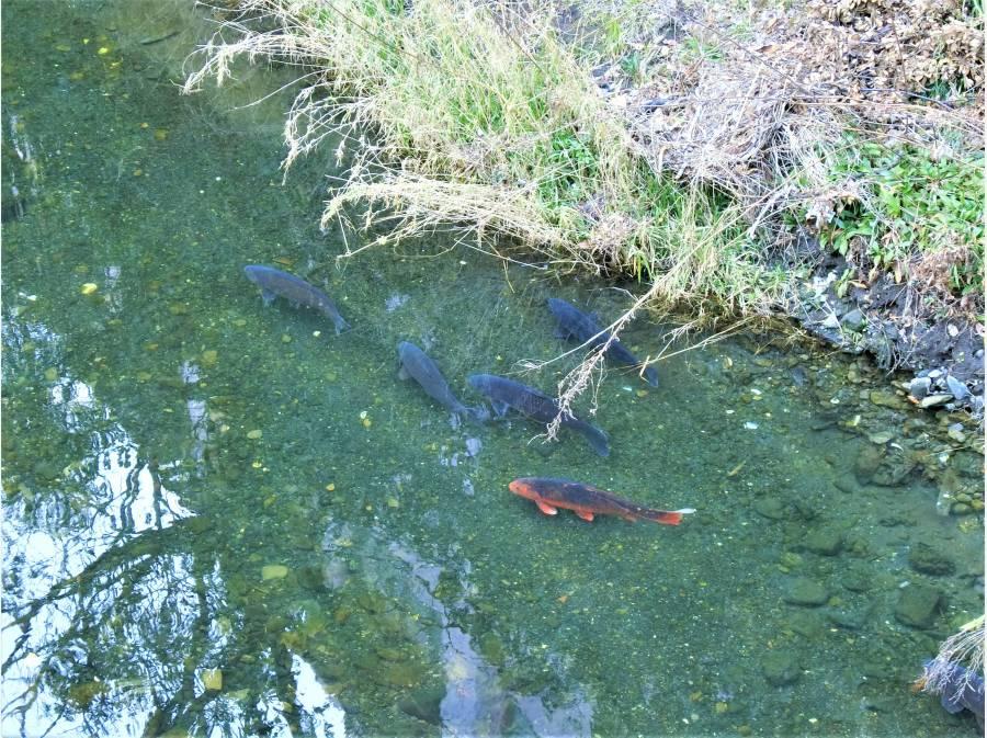 お庭の先から見下ろす大きな鯉や小魚の波紋をお楽しみ下さい。