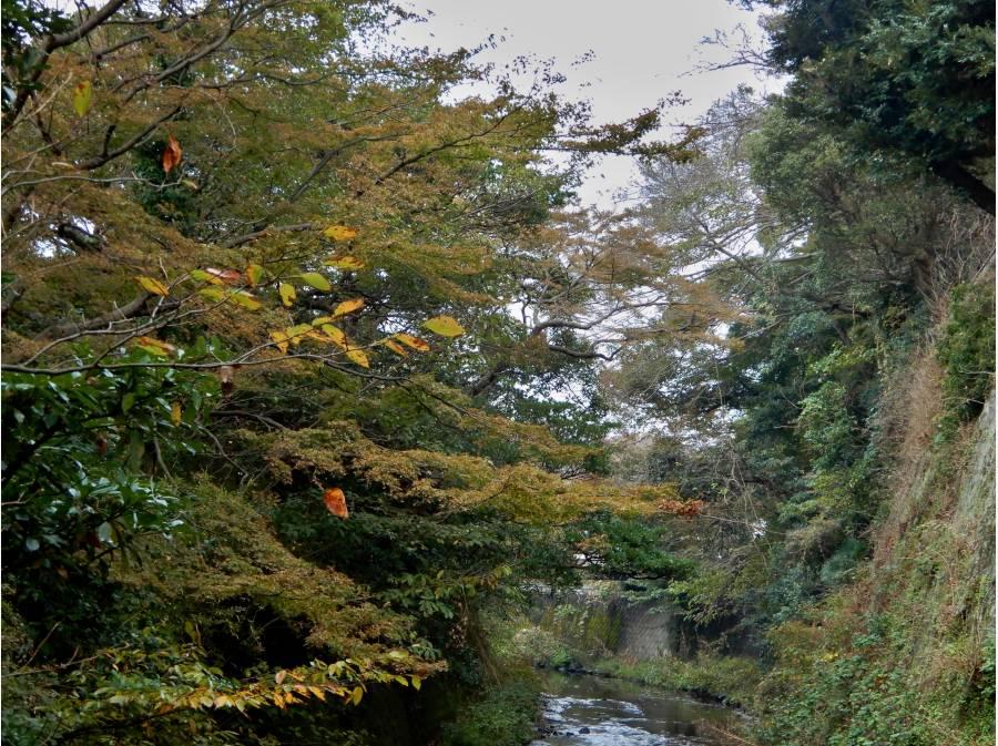 滑川の上流で静かな流れと季節花!