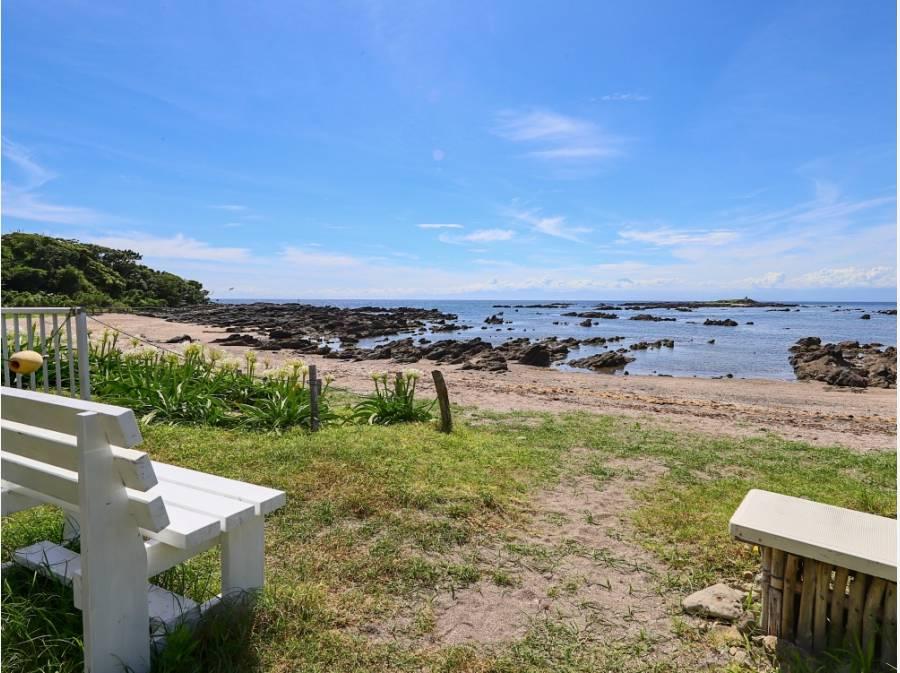 天神島では海と植物、海洋生物と触れ合えます