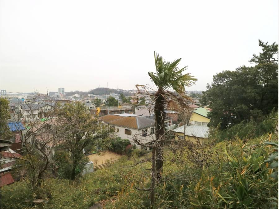 眼下には鵠沼の街並み、江ノ島を望みます
