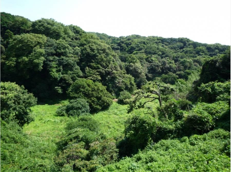鎌倉広町緑地まで徒歩17分(約1300m)