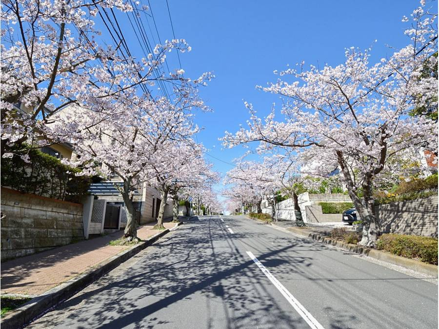 桜並木が美しい逗子ハイランド(イメージ)