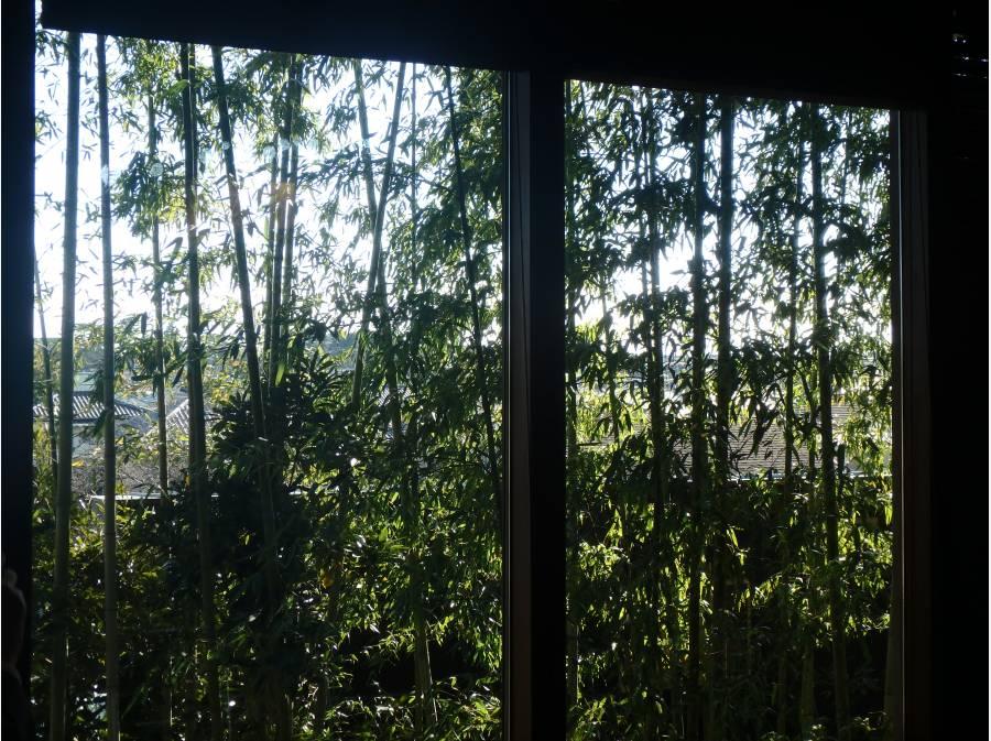 竹林を望む窓