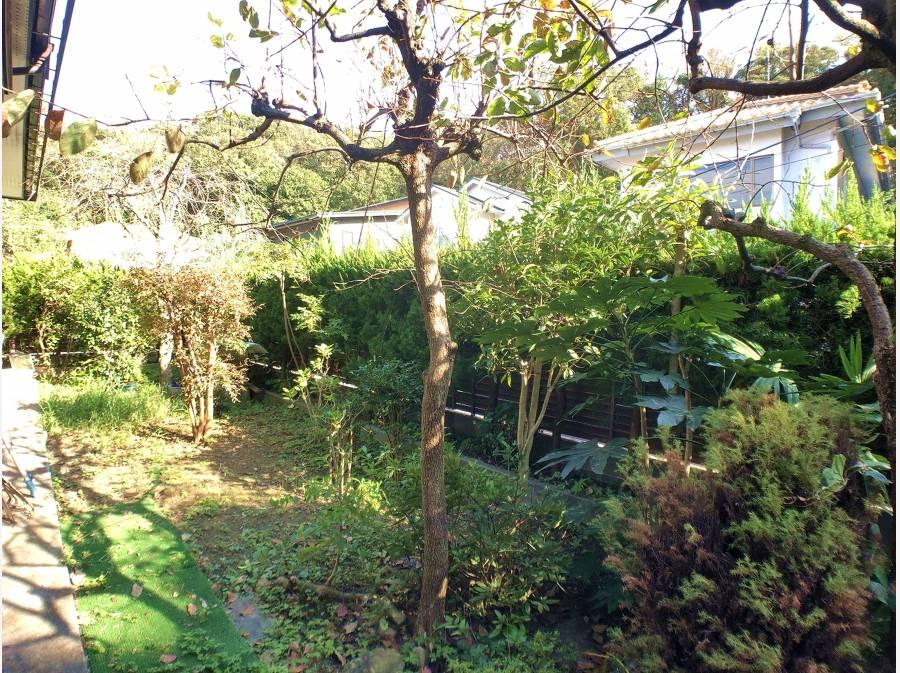 日本庭園のようなお庭です。