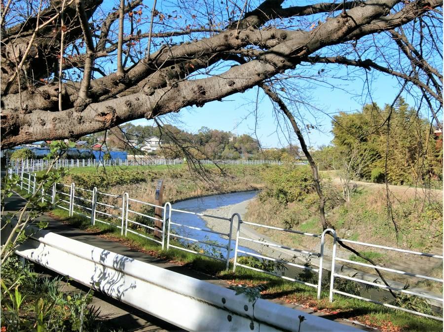 境川の桜並木の名所は徒歩1分(約85m)はお花見スポット!