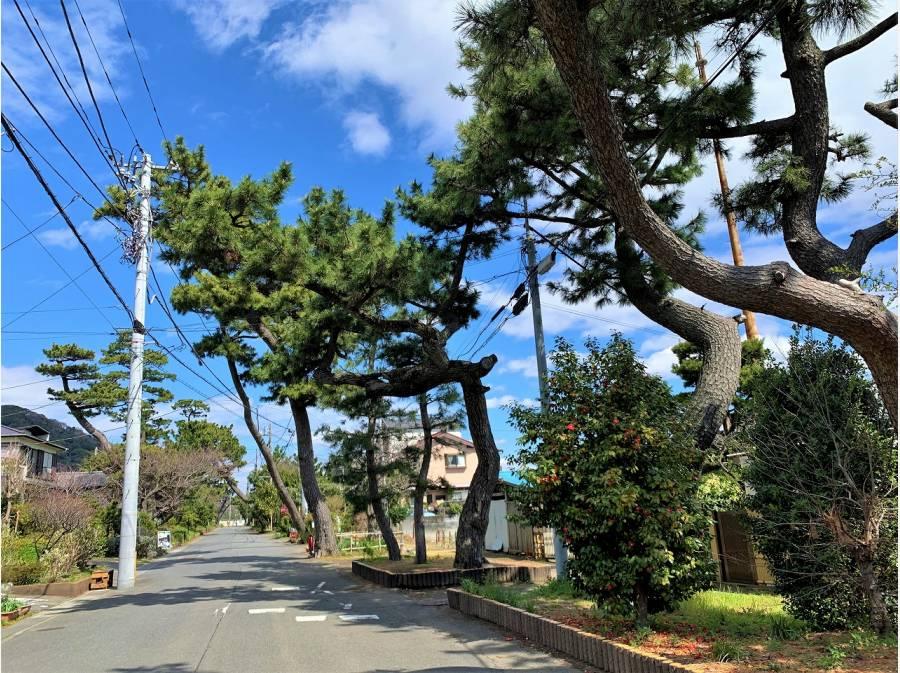 新・日本街路樹100景にも選ばれたという旧東海道松並木を抜けて物件へ