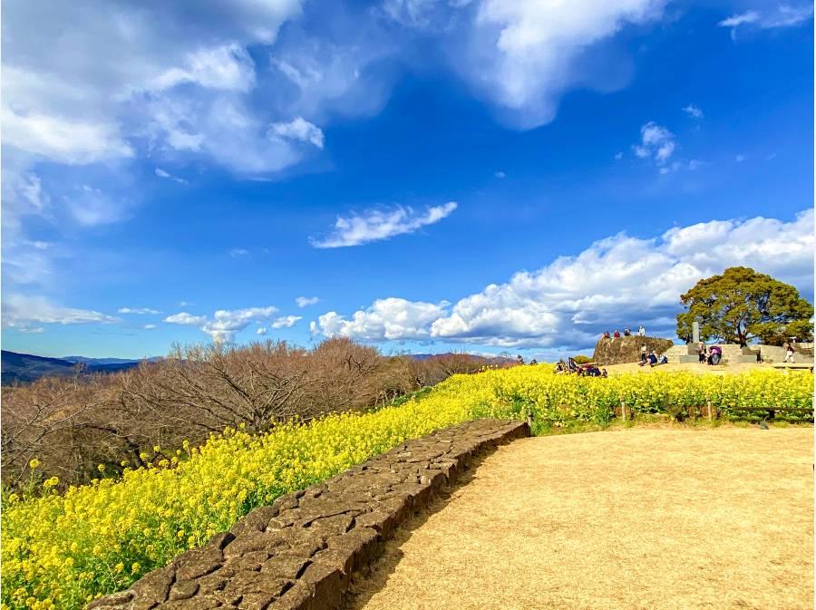吾妻山 菜の花畑(1.3キロ)