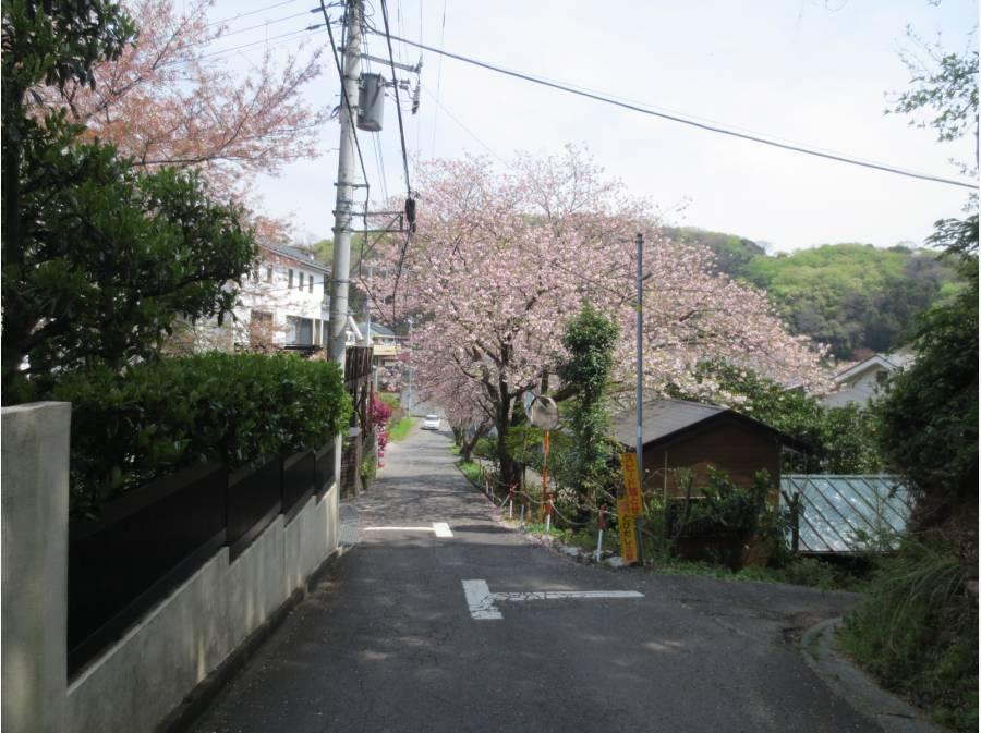 現地より駅までの徒歩コース、約300m地点には桜並木♪