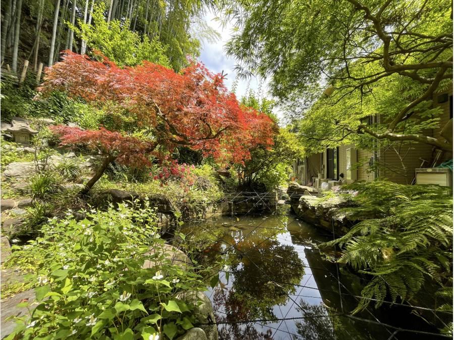 裏庭の池は約20帖大、鯉や金魚木々にはなんと!モリアオガエルの卵♪
