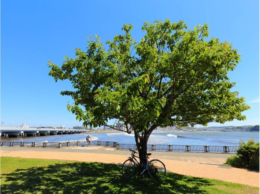 相模湾や江の島、自然と観光資源に恵まれた街『藤沢』イメージ写真