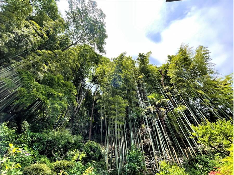 尾根伝いまでの敷地には竹林が建ち並び自然のプライバシーフェンスです。