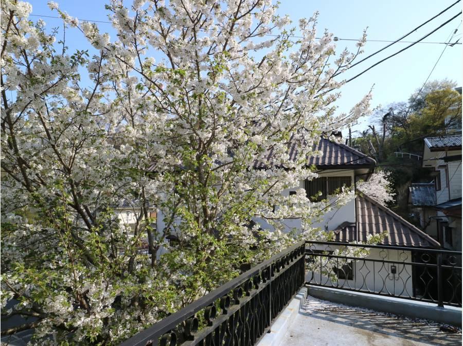 春には、目の前に桜が咲き誇ります