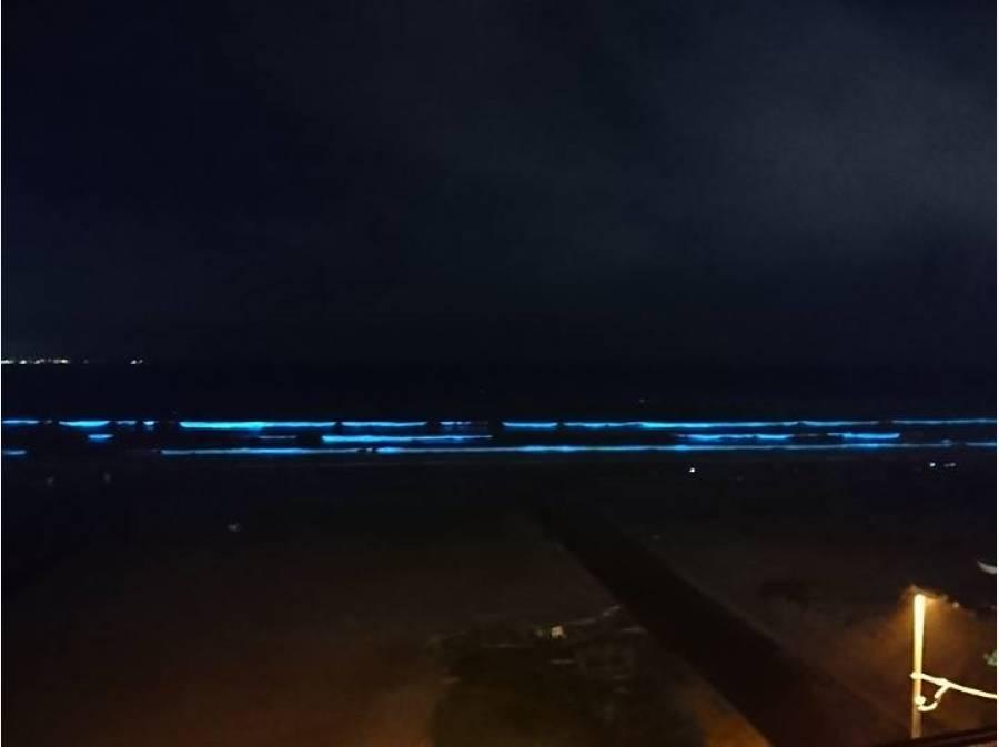 5月から8月頃には夜光虫が見られる時があります