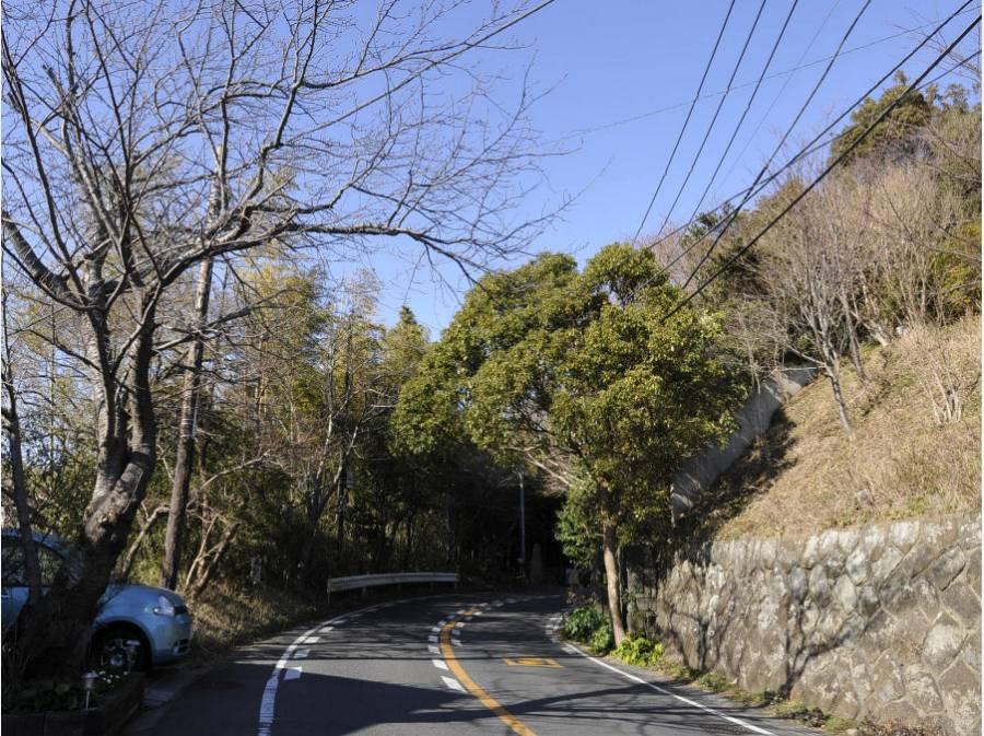 春には桜の名所としても名高い鎌倉山(約550m)
