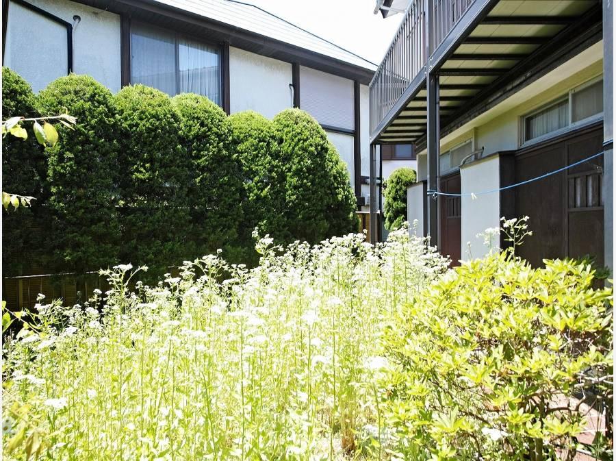 お庭が日当たりがよく、草木が元気いっぱい。