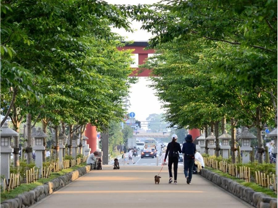 鎌倉駅から鶴岡八幡宮まで続く段葛徒歩10分(約750m)鎌倉らしい雰囲気