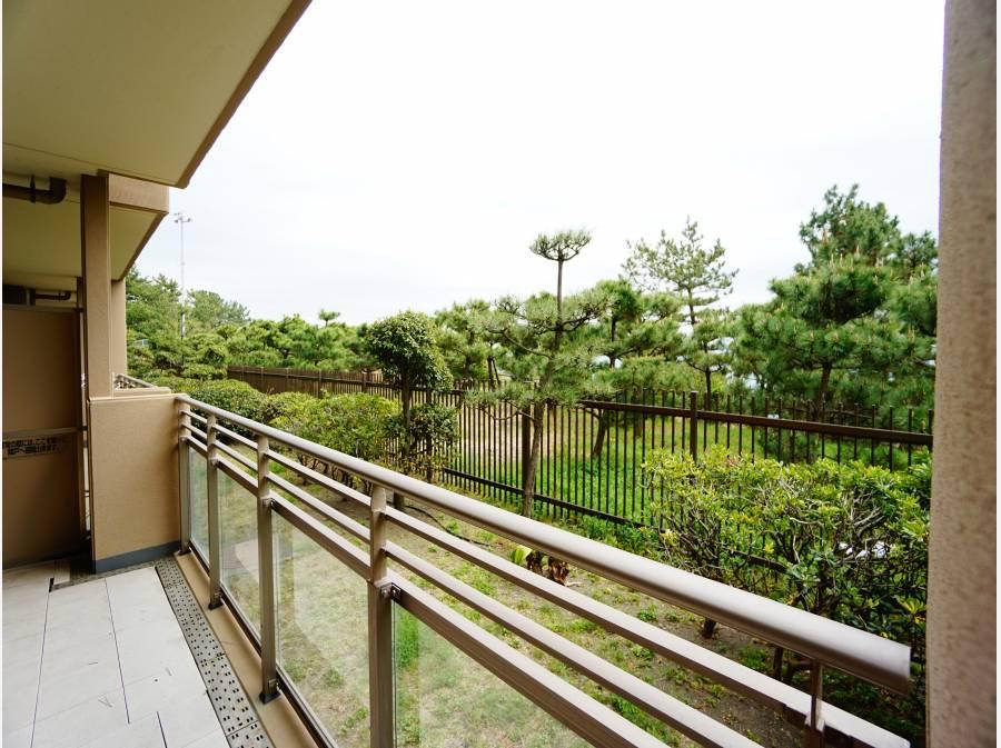 松の木の間からチラチラと海が見えます。