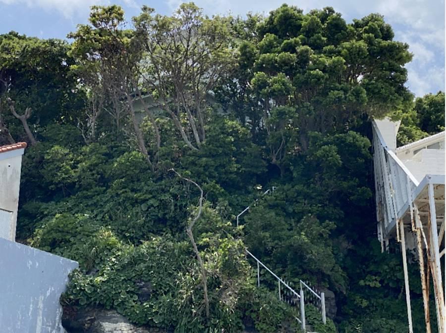 豊富な自然も魅力です。 岩場(磯)に降りる階段