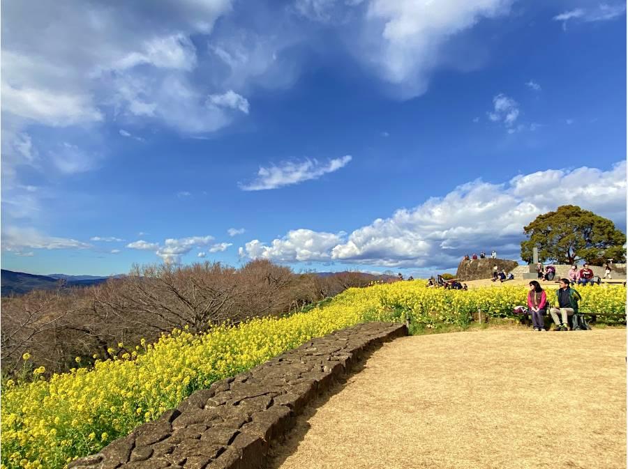 吾妻山公園 菜の花畑 徒歩17分(約1360m)