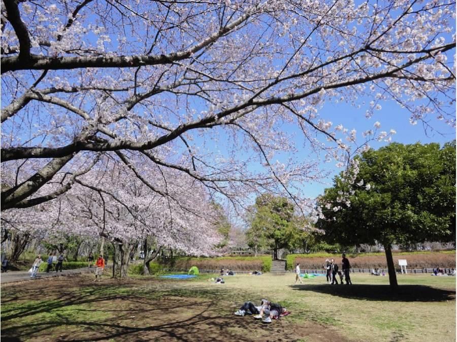 春には大庭城址公園の桜もお部屋から望めます
