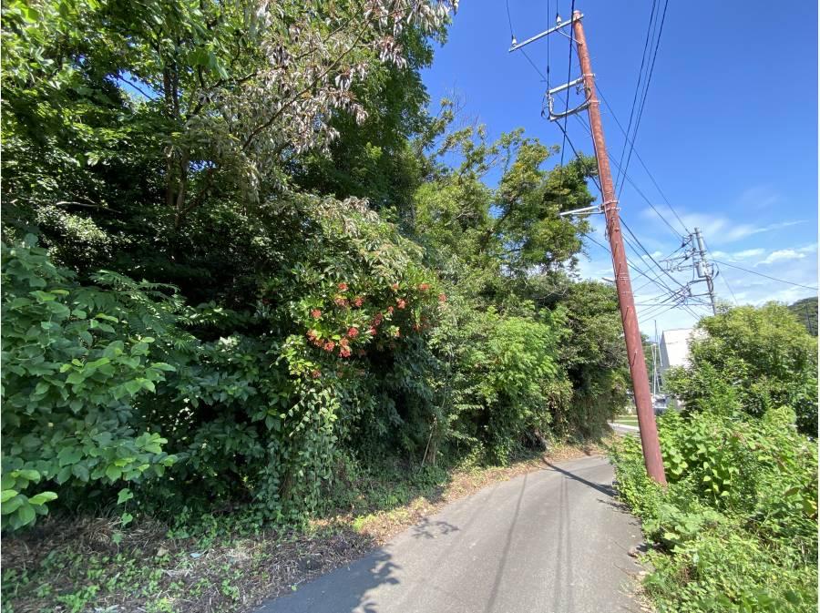 道路下からの撮影。左側の傾斜が現地です。