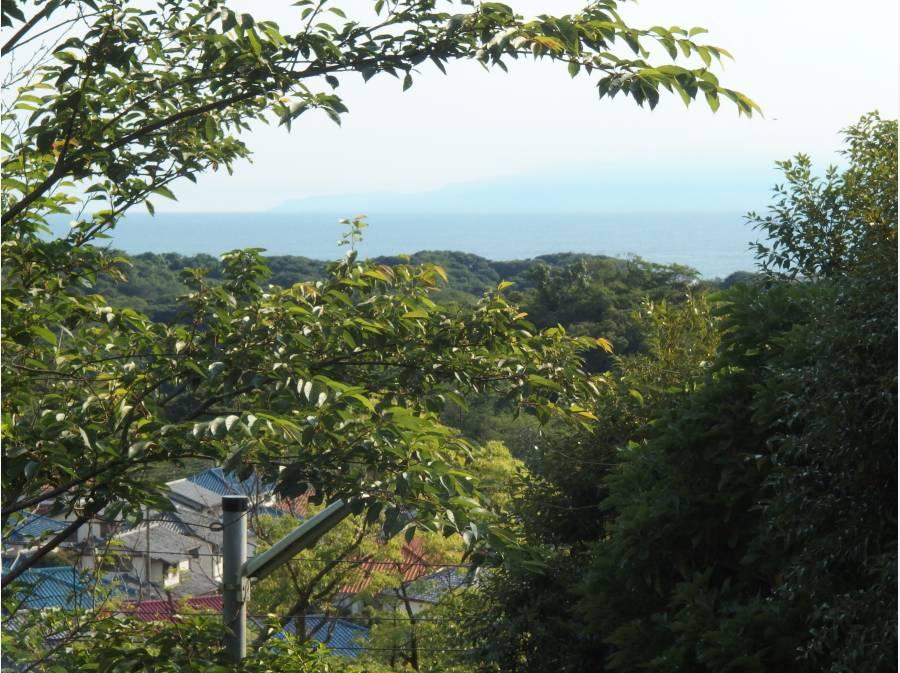 1階高さから見える緑と青い海の風景
