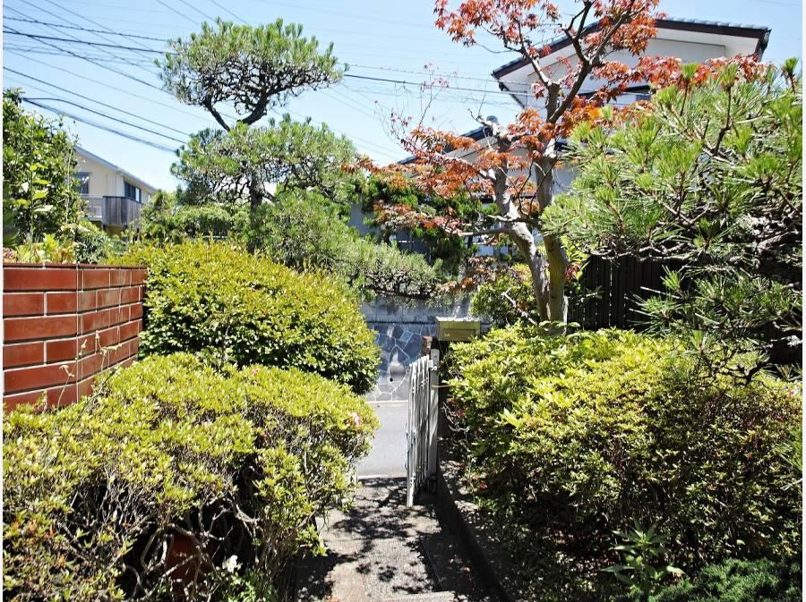 玄関周りの植木。